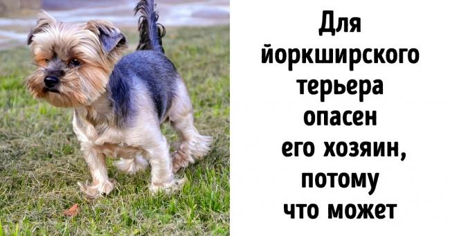 Покажіть собаку до ветеринара, якщо помітите ці 12 симптомів