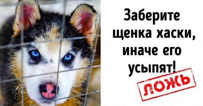 5 способів, якими користуються шахраї, щоб заробити на безпритульних тварин