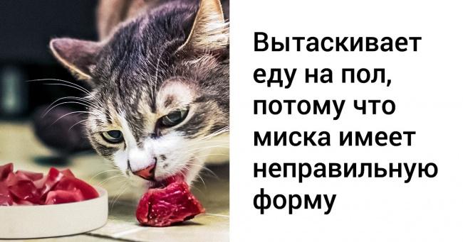 14 речей, які не можна робити при догляді за кішкою
