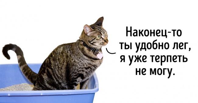 12 пояснень, після яких стануть зрозумілі дивні звички котів