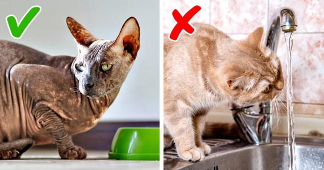 11 ознак поганого самопочуття кішки, на які зазвичай не звертають уваги
