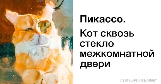 14 доказів того, що бути котом — справжнє мистецтво