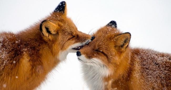 10 тварин, у яких можна повчитися вірності і любові