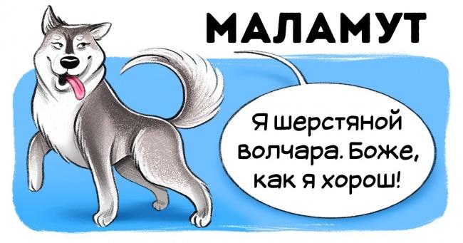 Чесний гід по породам собак від першої особи (Частина 2)