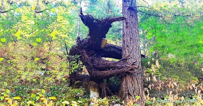12 моторошних лісів, в яких страшно навіть вдень