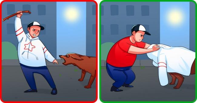 18 простих речей, які треба знати, якщо на вас напала собака